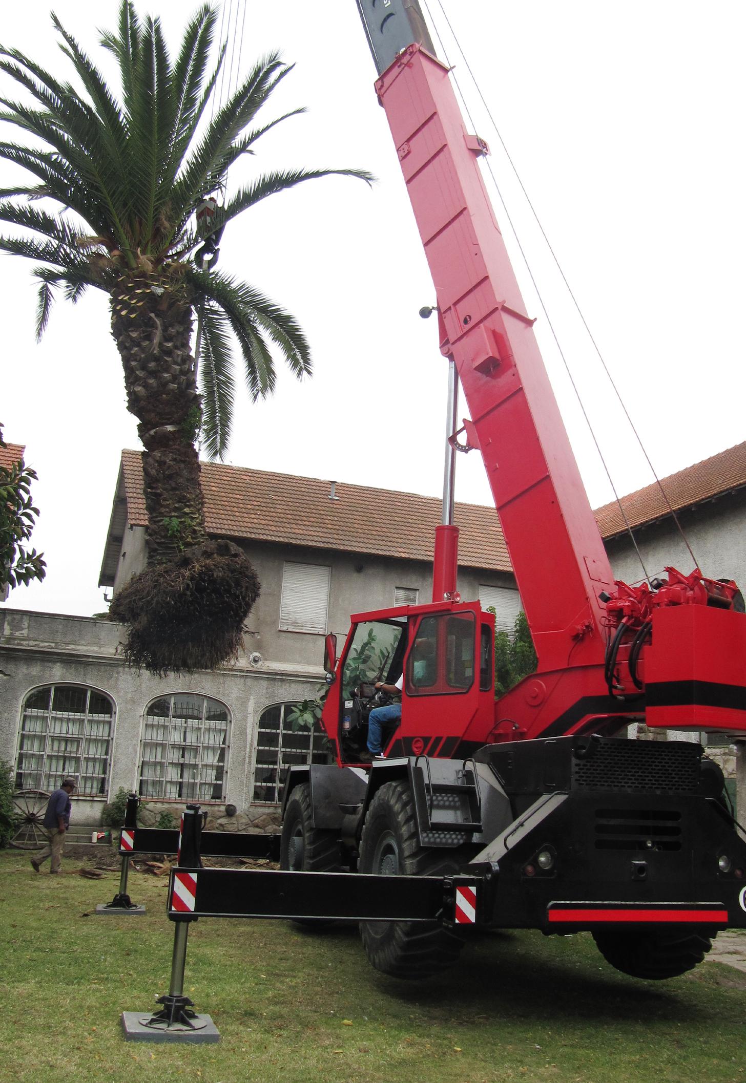 Colocación palmeras Unzué